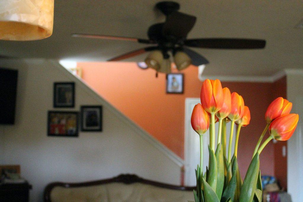 Une plante d'intérieur dans une maison